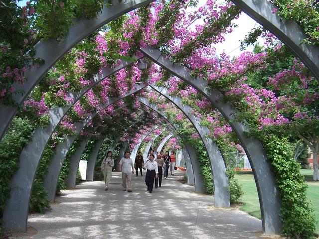 Brisbane south bank flickr photo sharing for Landscape architect brisbane