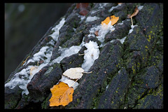 IMG_8979 by svantland