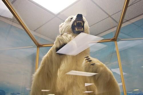Polar Bear At Juneau Airport Flickr Photo Sharing
