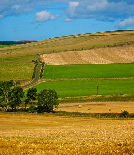 Summer Fields Lane | by billtam