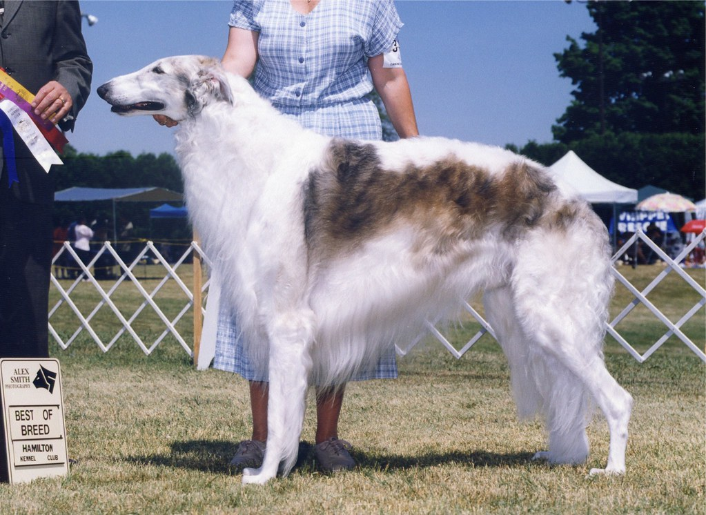 Best Dog Breed That Co Not Bark