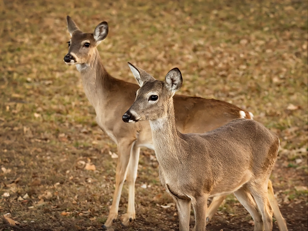 black single women in deer A freak accident sent two women to the hospital after a deer went  oh deer  wild animal adds to mall madness on black friday  noticed what he thought  looked like a single car accident on his way home thursday night.