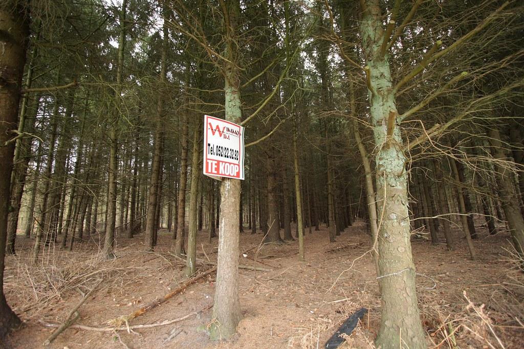 Img 0352 stekene bos te koop bos te koop waardevol voor for Bos te koop