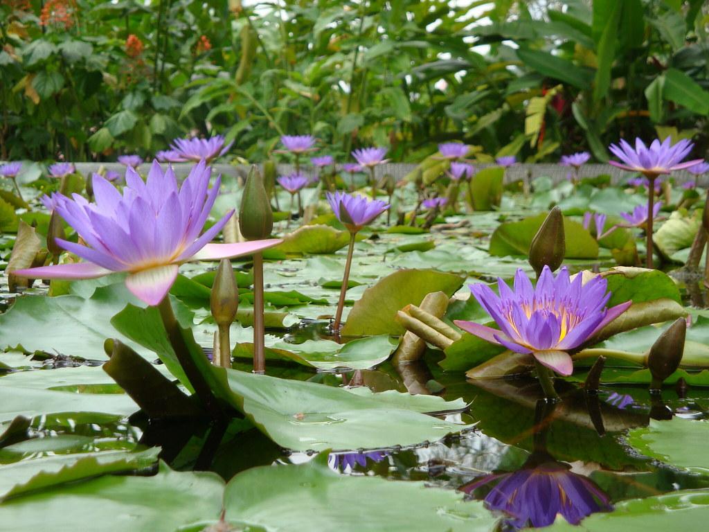 Il giardino acquatico che vorrei barbara flickr for Giardino 3d gratis italiano