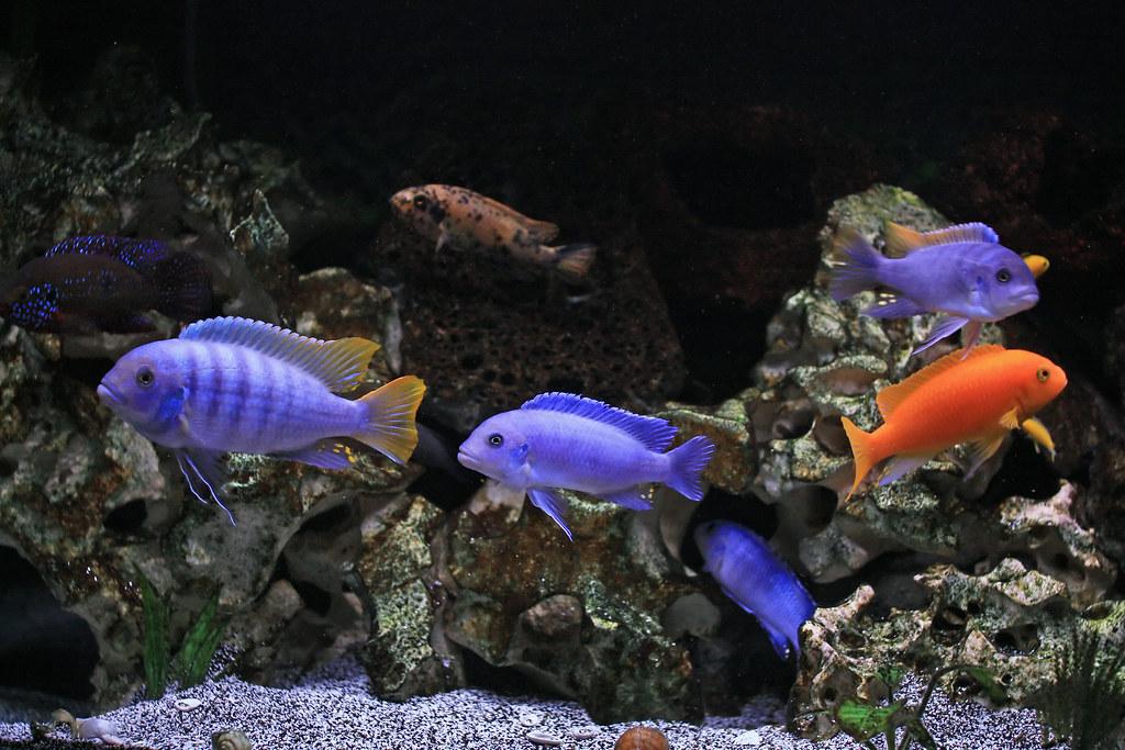 Best Fish And Meat Restaurants Around Wrigley Field