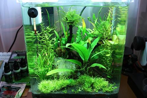 dennerle nano 20l aquarium flickr photo sharing. Black Bedroom Furniture Sets. Home Design Ideas