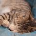 cat,sleeping