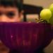 grapewatch
