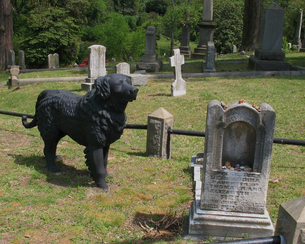 Hollywood Cemetery Richmond Va Black Dog