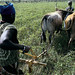 A woman plows her fields