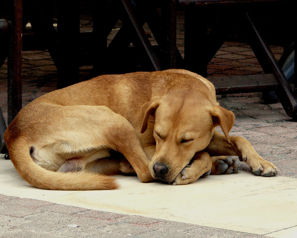 Sleeping Dogs Camera Hack