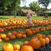A pumpkin worker