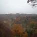fall_trees_31