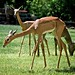 Anorexia in the Wild Kingdom