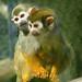 I've got a Monkey on my back.....