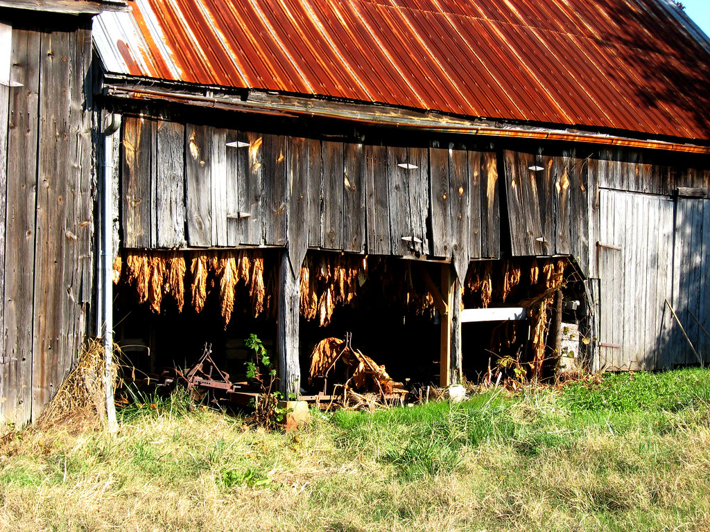 Chaneyvilletobaccobarn3 This Old Tobacco Barn Is On