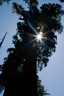 Sun behing General Grant Tree | by colddayforpontooning