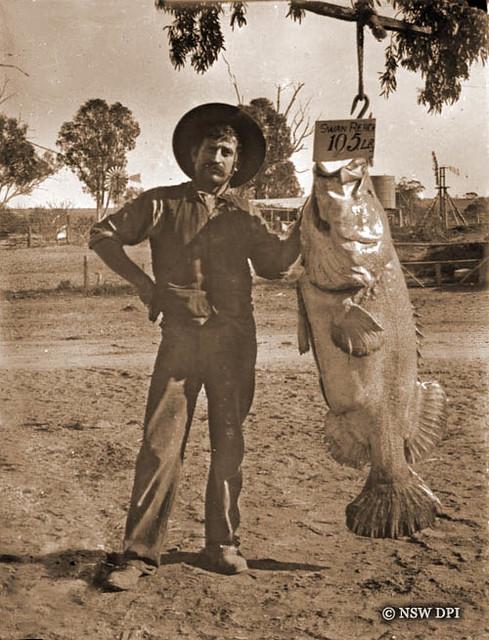 Giant murray cod | Local Blacksmith Ben Schwarz with his ...