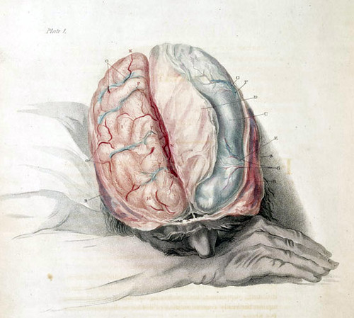 Charles Bell: Anatomy of the Brain, c. 1802 | by brain_blogger