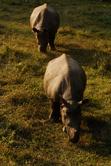 Chitwan National Park - rhinocerouseseseses | by Deadly Knitshade
