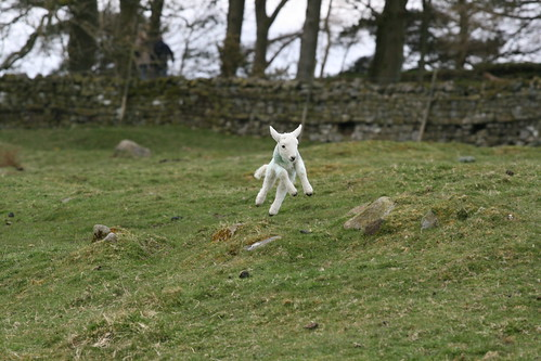 Jumping lamb in Newcastle | by MattSutts