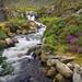 Rhaeadr Ogwen Waterfall