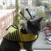 rumblebee1.jpg