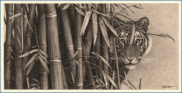 'Eye to Eye' - Bengal Tiger - Fine Art Pencil Drawings ...
