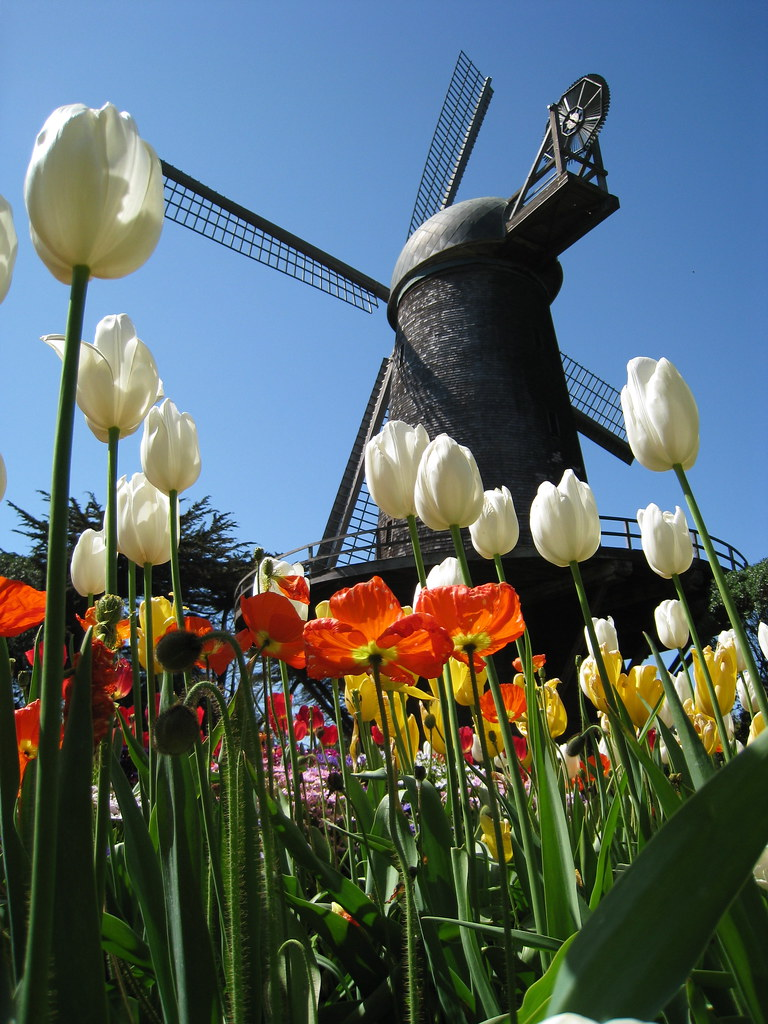 Queen Wilhelmina Tulip Garden And Windmill Golden Gate Par Flickr