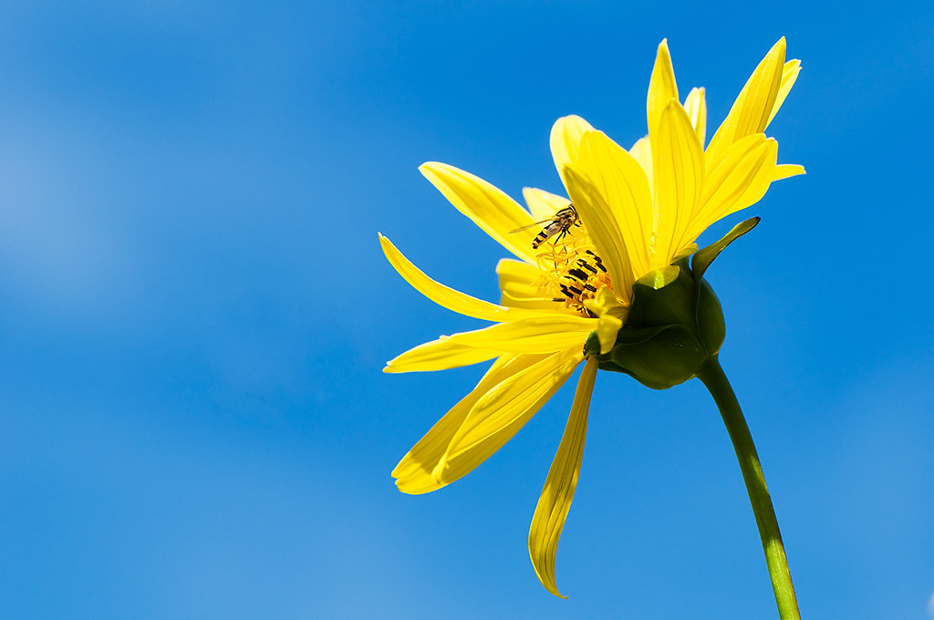 Yellow Flower Blue Sky...