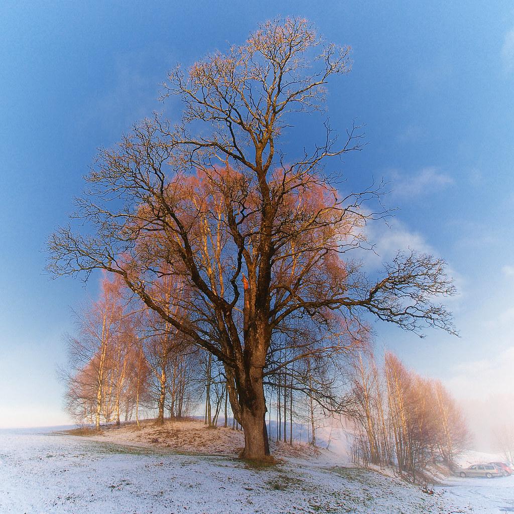 November Scenery Vinterlandskap Norge Winter Landscape