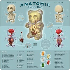 Gummi Anatomy by Jason Ralph Freeny | by Lynne Hand