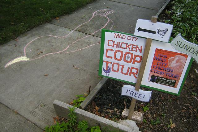 Madison Chicken Coop Tour
