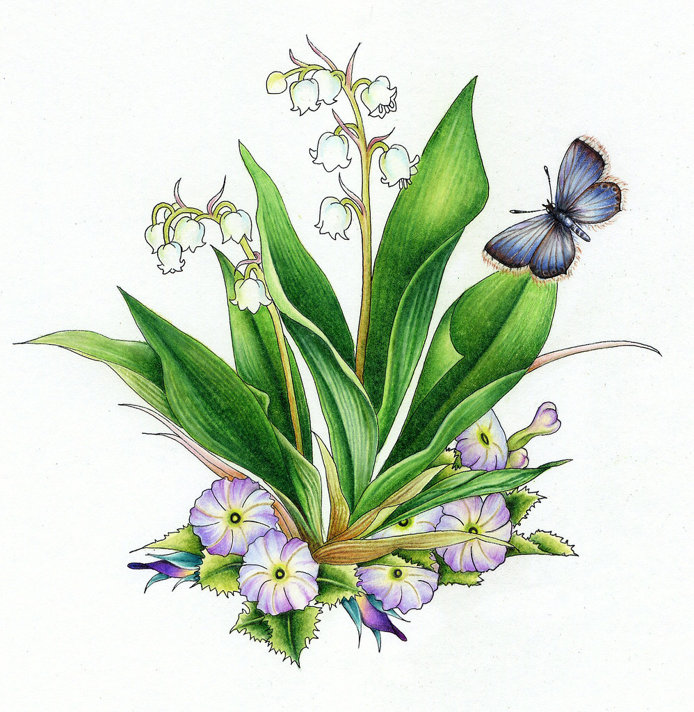 Lily Of The Valley (Muguet) May Flower Of The Month