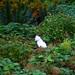 Kelvingrove Park Flower 065