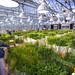 Greenhouse Grasses