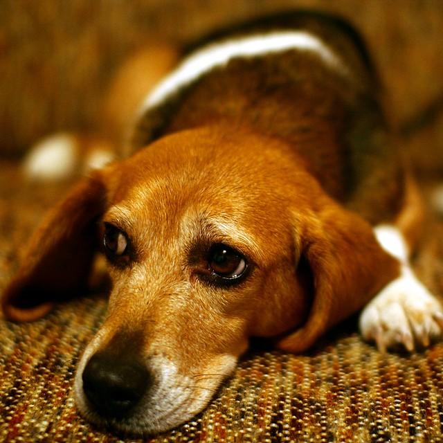 Sad Puppy Dog Facegif