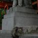 cat at Yasaka-jinja, Kyoto