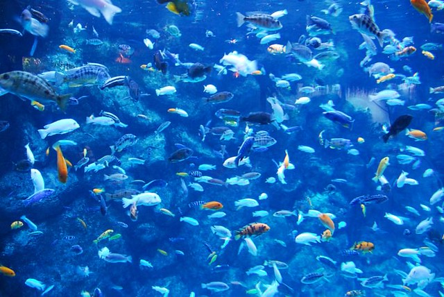 Lots of fish toronto zoo canada masinka flickr for Lots of fish