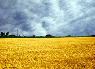 Cielos y campos de la pampa Argentina 3 / Skies and fields from Argentina's pampa 3 | by Claudio.Ar