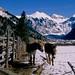 Telluride burros