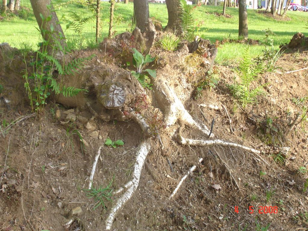 Como se orosiona el suelo jr flickr for Como se creo el suelo