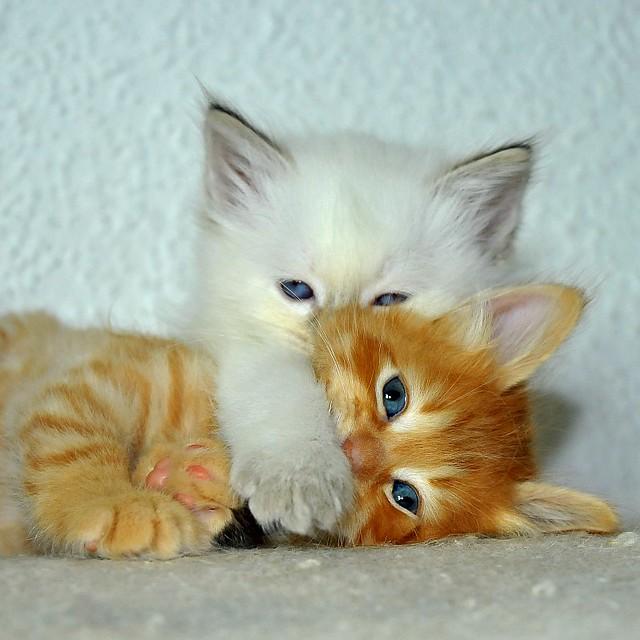 влюбленный котенок фото #10