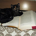 """This is a game cats love to play called, """"Not being helpful. At all."""""""