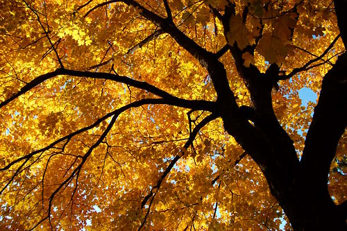 Golden Canopy | by Jeremy Stockwell