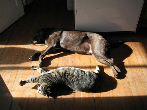 Barton and Archer share a sunbeam | by lxt