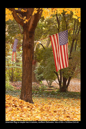 American Flag On Maple Tree In Autumn Flickr Photo