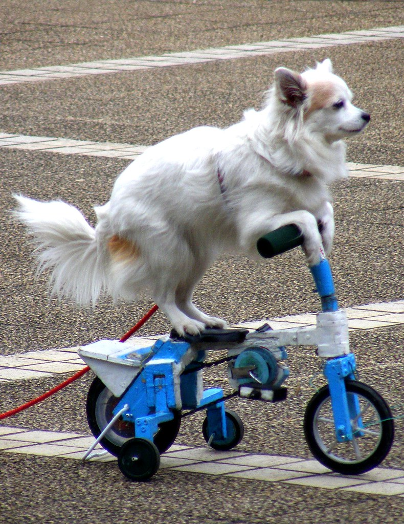 Dog On A Bike St Stev Flickr
