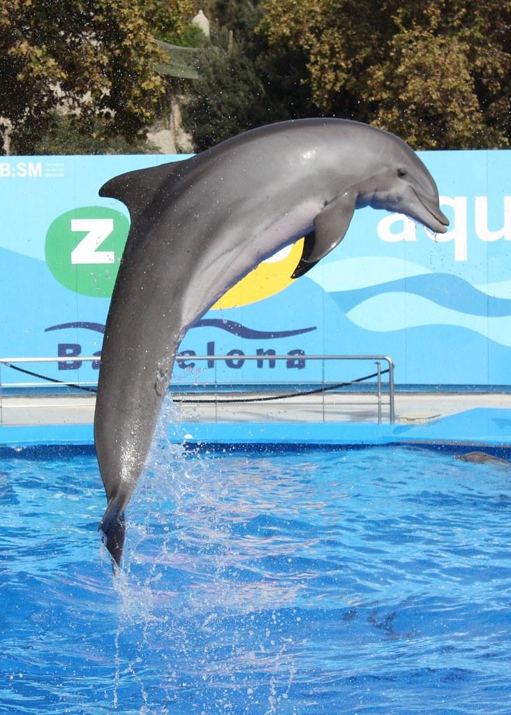 Delfin Show 2 | Im Zoo Barcelona - Oktober 2008 | Martin Fisch ...