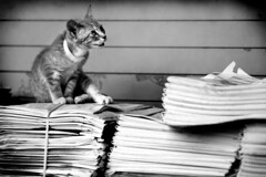 newspaper kitty